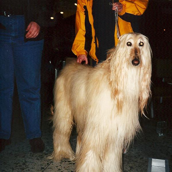 dogsofmedina_14.jpg