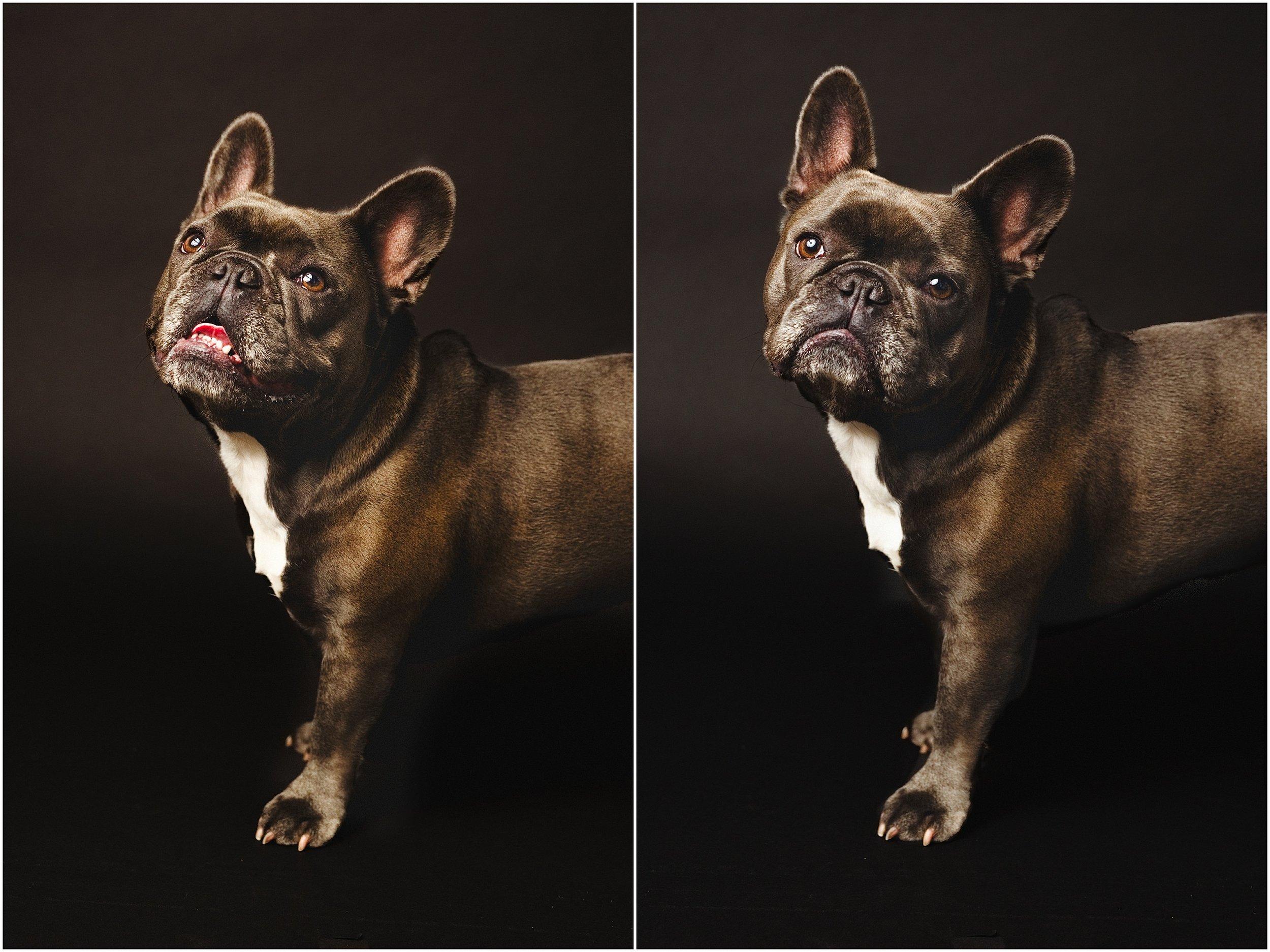 jamie_leonard_photography_pet_studio_dog.jpg