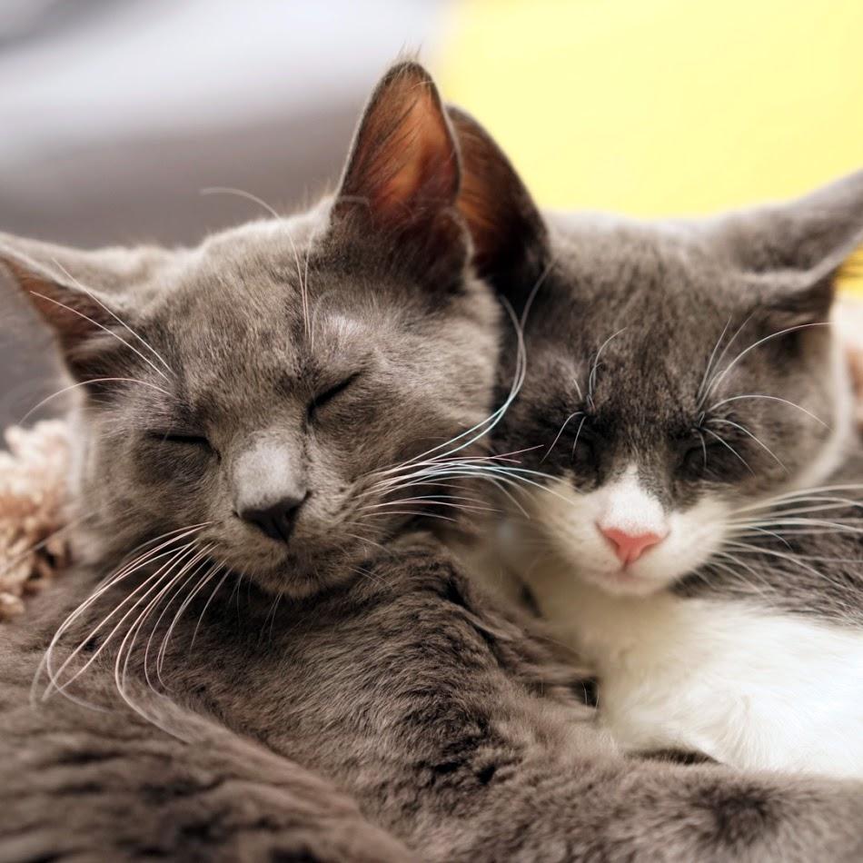 Just cuddling, part one.