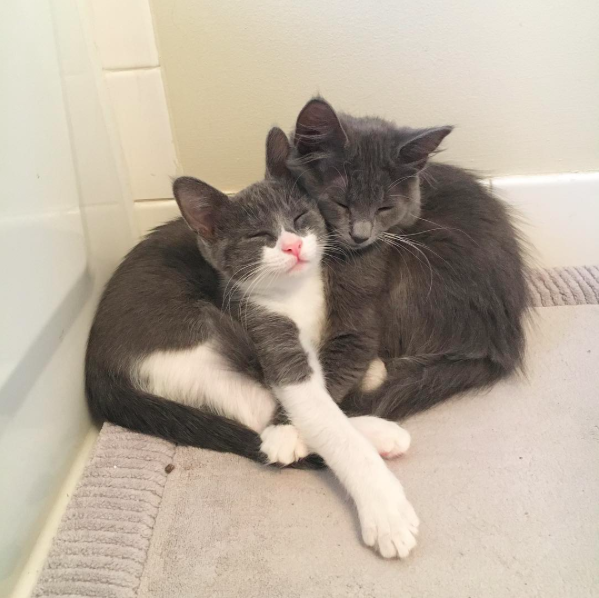 Just cuddling, part two.