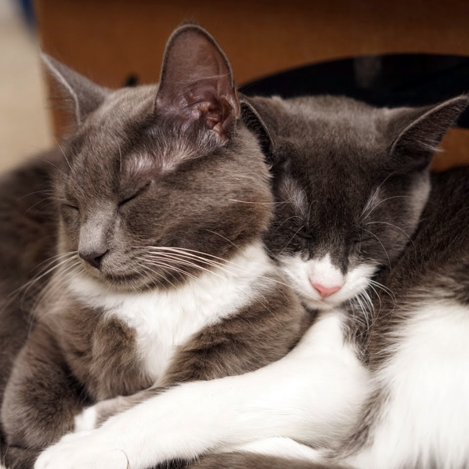 Just cuddling, part three.