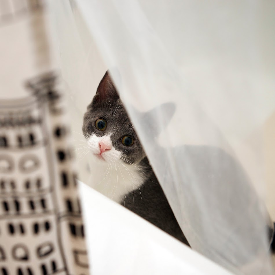 Other times, she sits in between our shower curtains and jumps out at us when we're peeing.