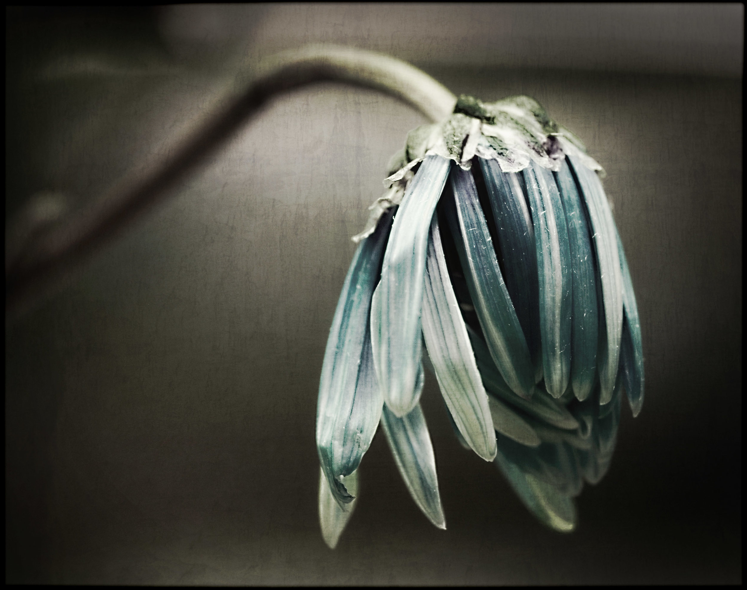 drooping-flower.jpg