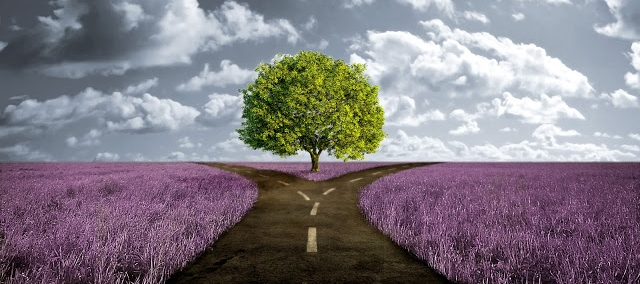 crossroad-path-in-lavender-meadow.jpg