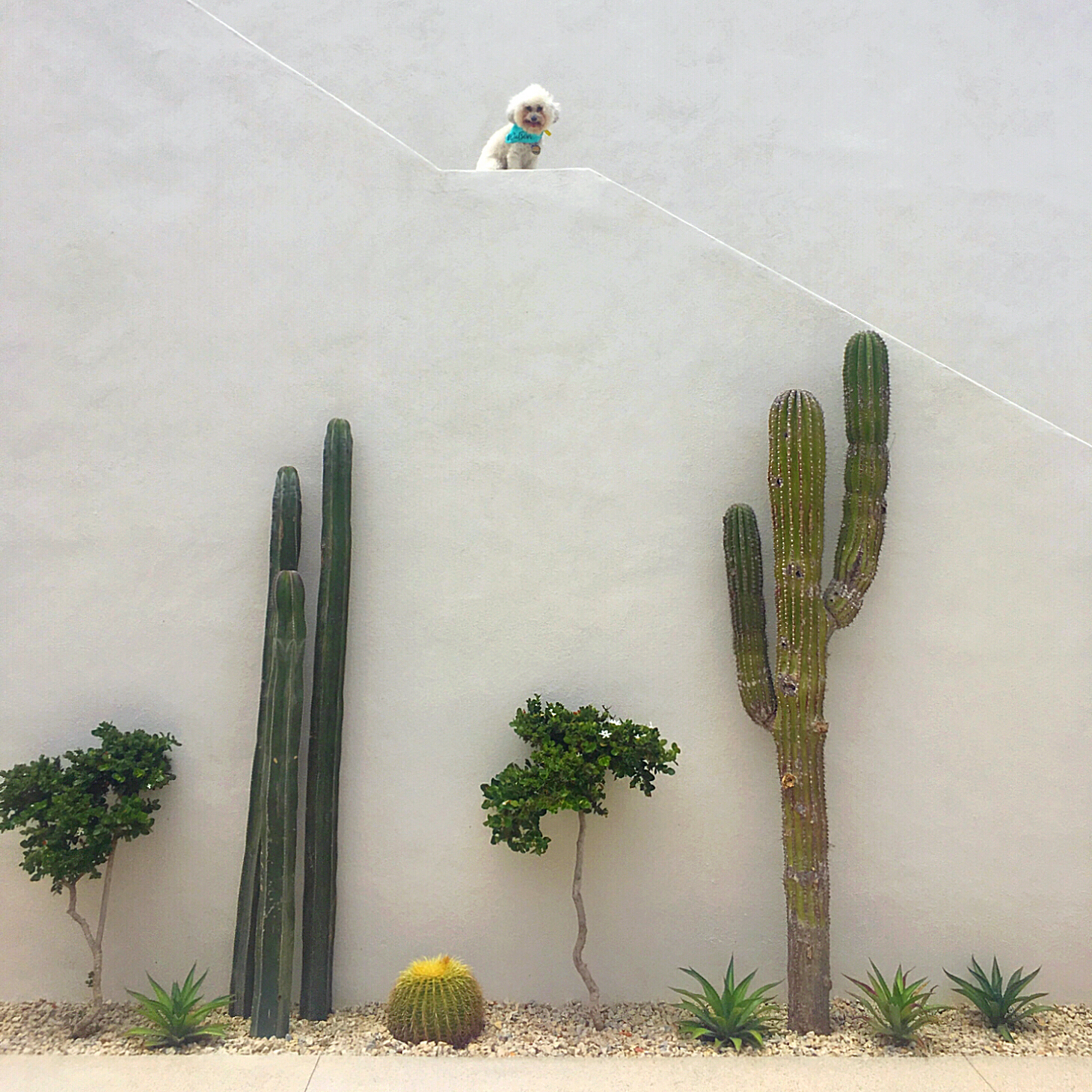White wall with cacti at the Hotel San Cristobal in Todos Santos, Mexico | Watson & Walls