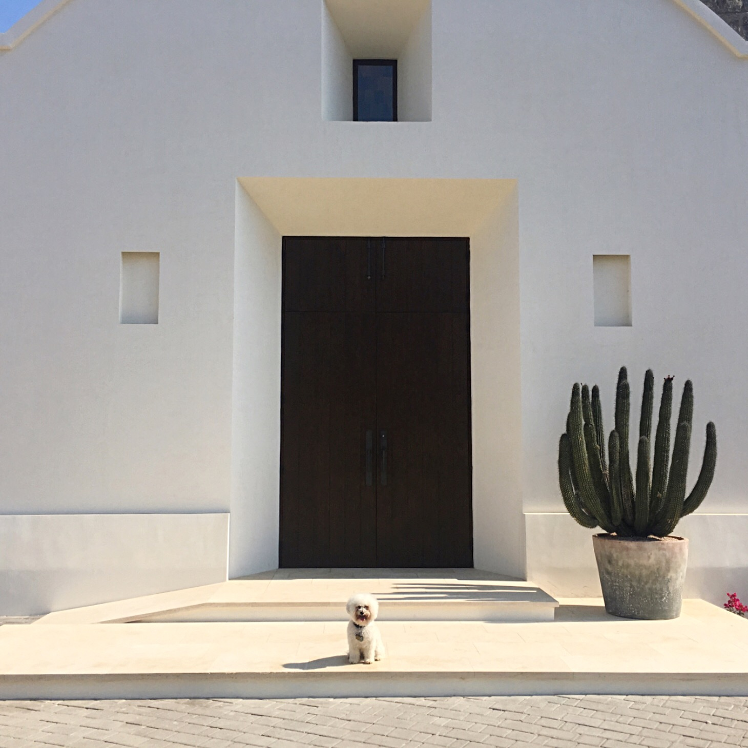 Watson by the cathedral at the Hotel San Cristobal in Todos Santos, BCS Mexico | Watson & Walls