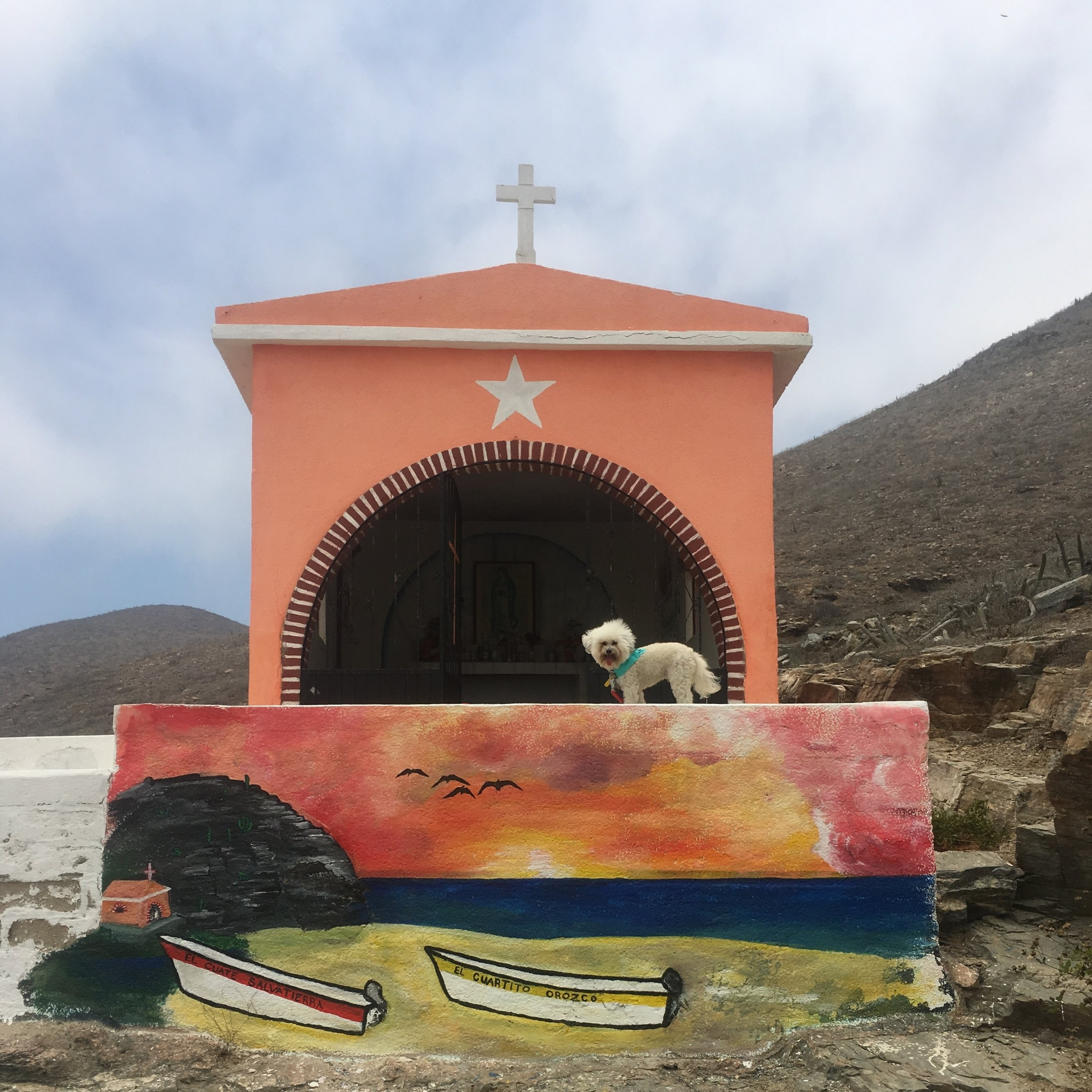 Watson at the sanctuary by the Hotel San Cristobal in Todos Santos, BCS Mexico | Watson & Walls