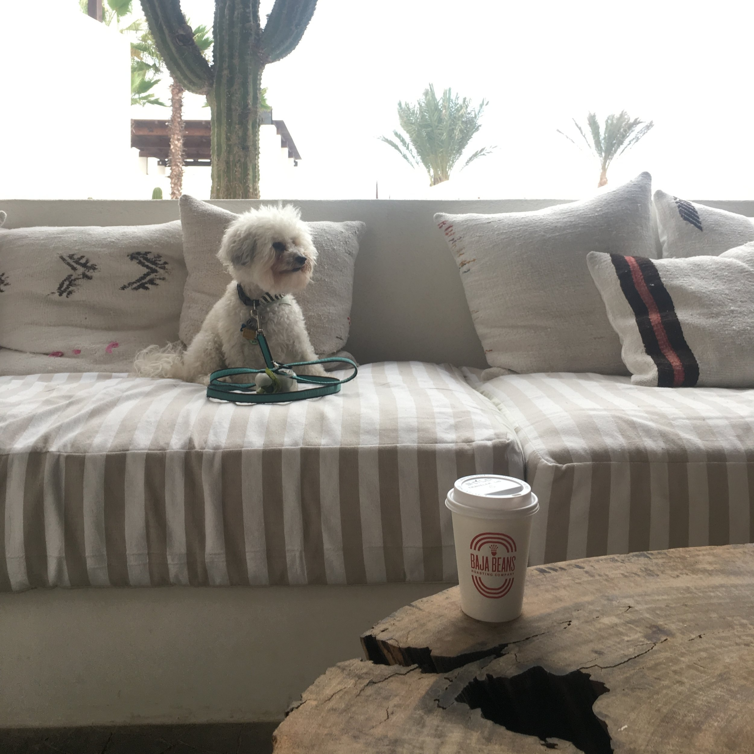 Watson with coffee at the Hotel San Cristobal in Todos Santos, BCS Mexico | Watson & Walls
