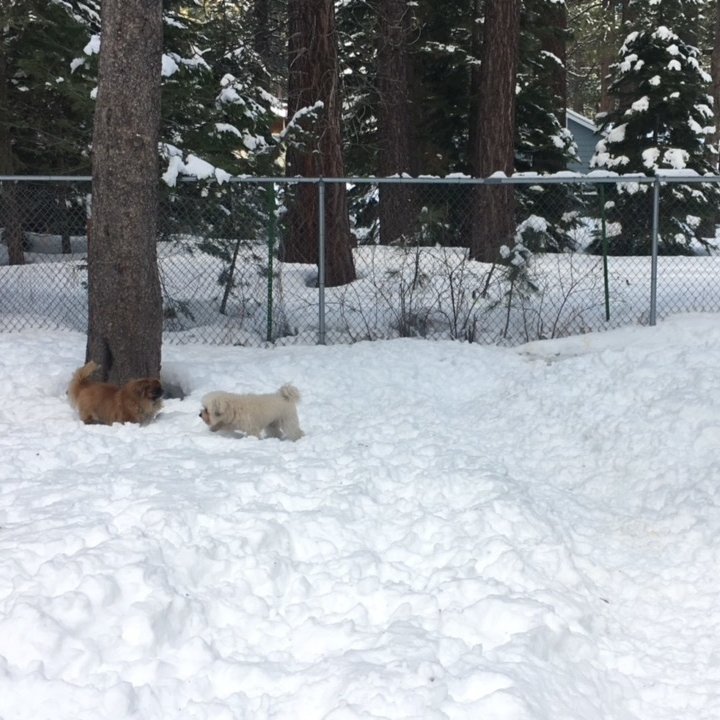 Watson at the cabin in the snow of South Lake Tahoe, CA | Watson & Walls
