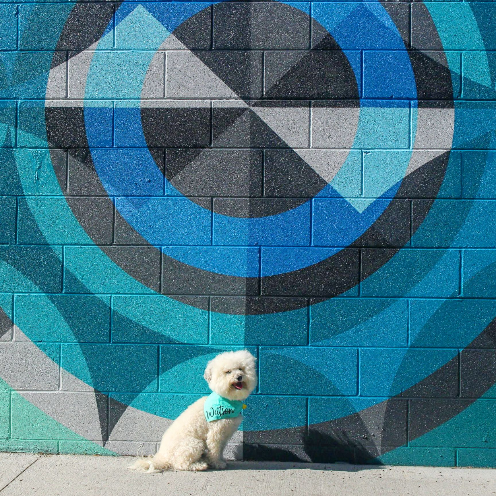Teal circles mural in Denver, CO | Watson & Walls