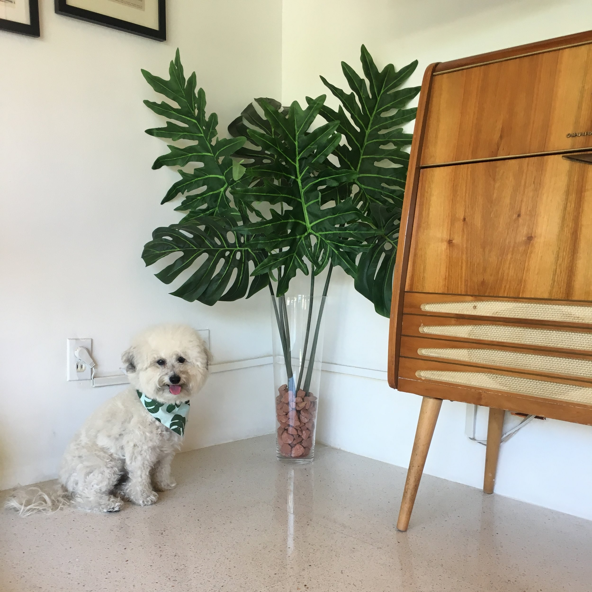 Watson at an Airbnb in Palm Springs, California | Watson & Walls