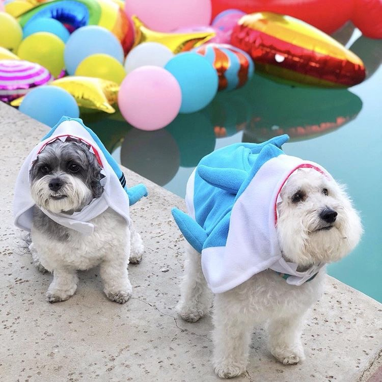 Watson with his friend Arne ready for Shark Week in Palm Springs, California | Watson & Walls