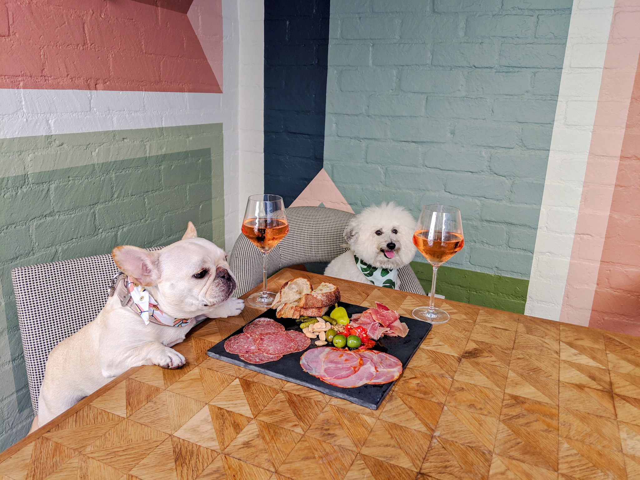 Two cute dogs with charcuterie and rosé at the Viviane restaurant, Avalon Hotel Beverly Hills | Watson & Walls