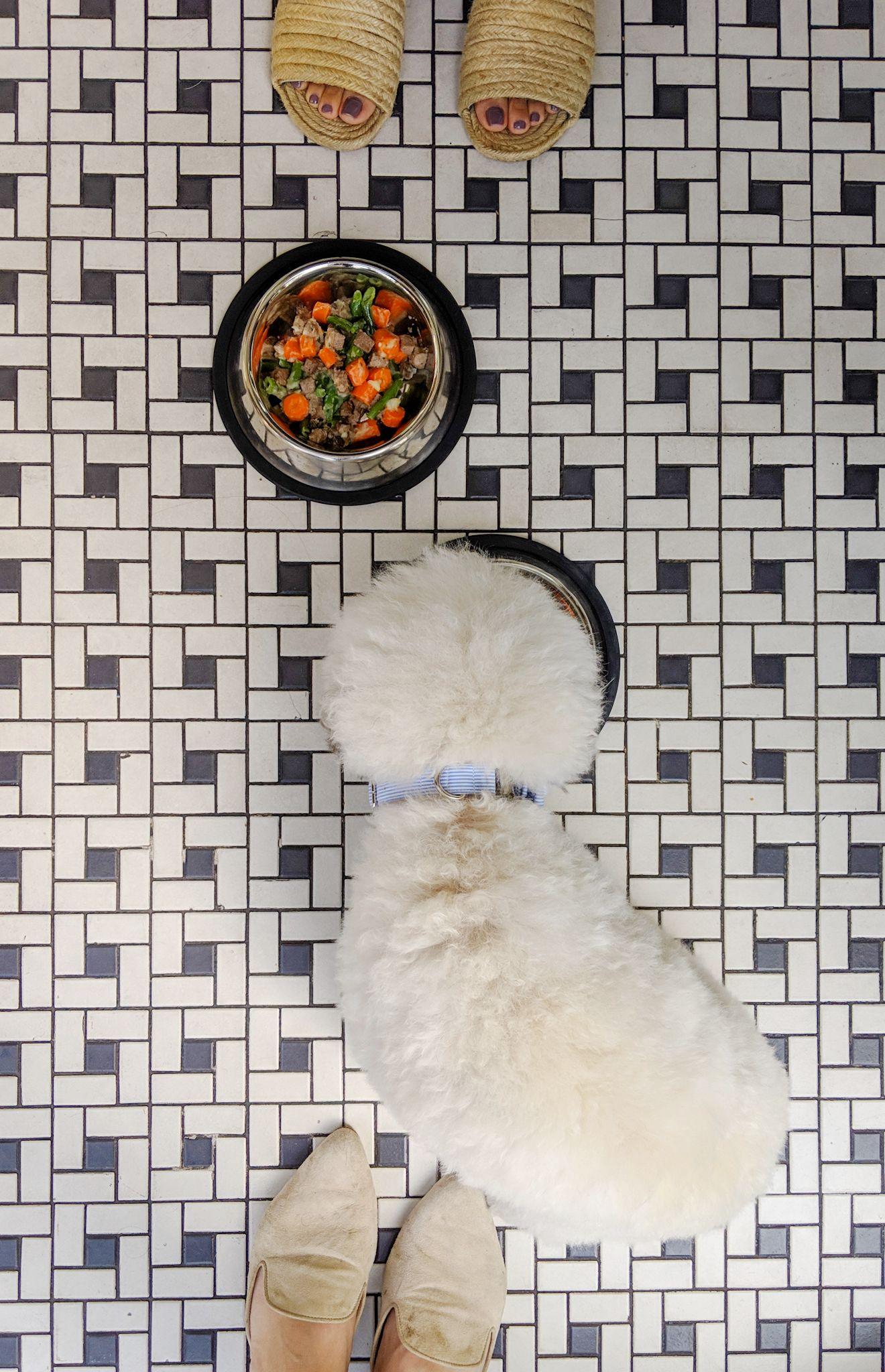Tile floor and cute shoes with a pampered pooch, Fig at the Fairmont Miramar Hotel Santa Monica, California | Watson & Walls