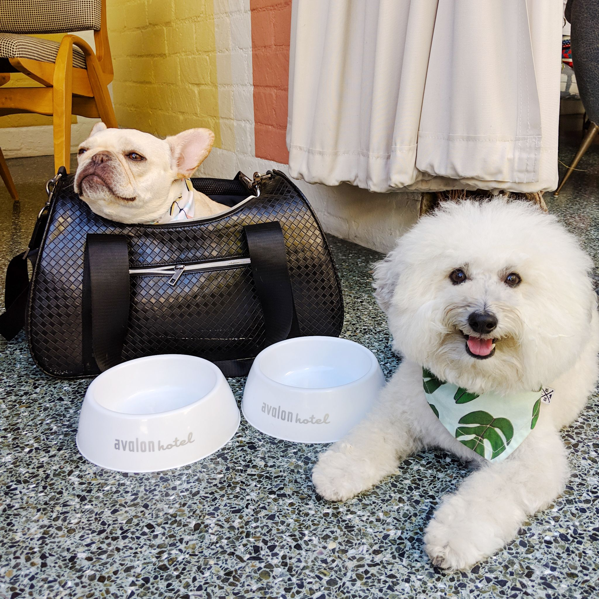 Water dishes for dogs at the Viviane restaurant Avalon Hotel Beverly Hills | Watson & Walls