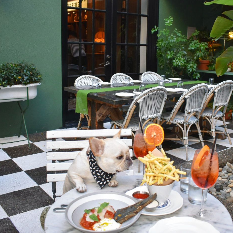 Fira eating all the food at Mardi Palihouse West Hollywood hotel restaurant | Watson & Walls
