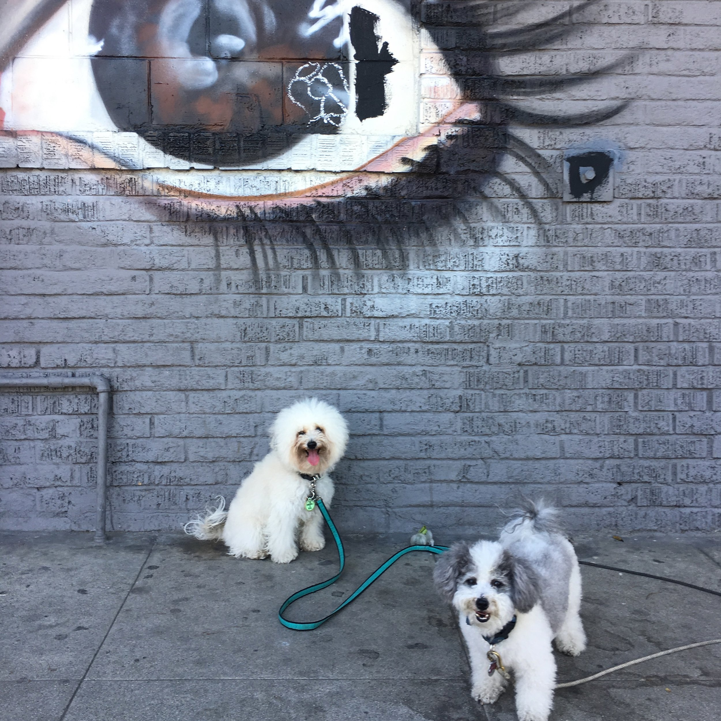 Two cute fluffy dogs by a mural in Venice Beach, CA | Watson & Walls