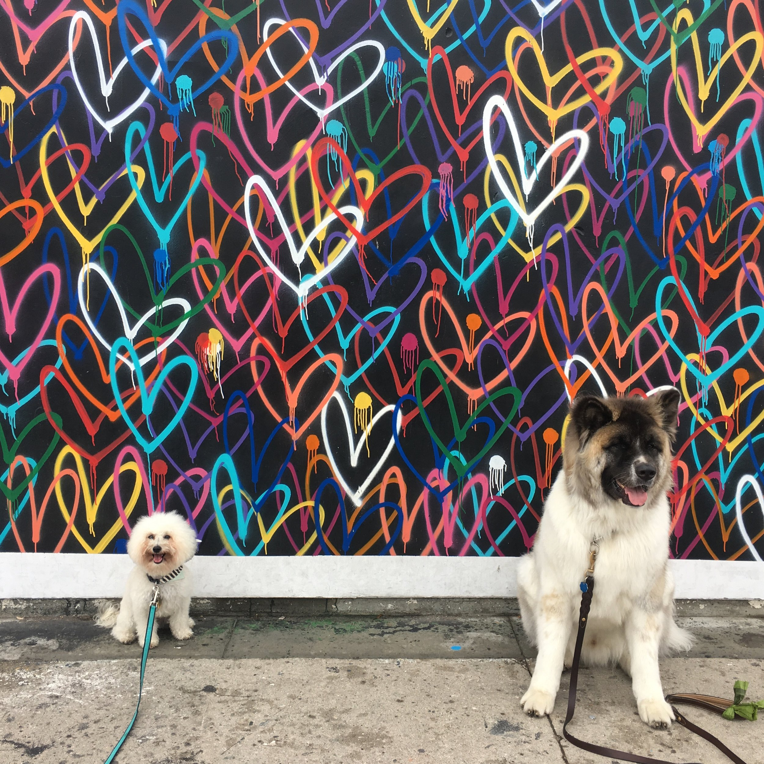 Two cute fluffy dogs, Akita and a bichon, by a J Goldcrown Love Wall mural in Venice Beach, CA | Watson & Walls