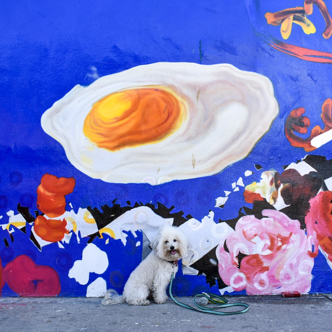 Cute fluffy dog by an eggs and bacon mural in Venice Beach, CA | Watson & Walls