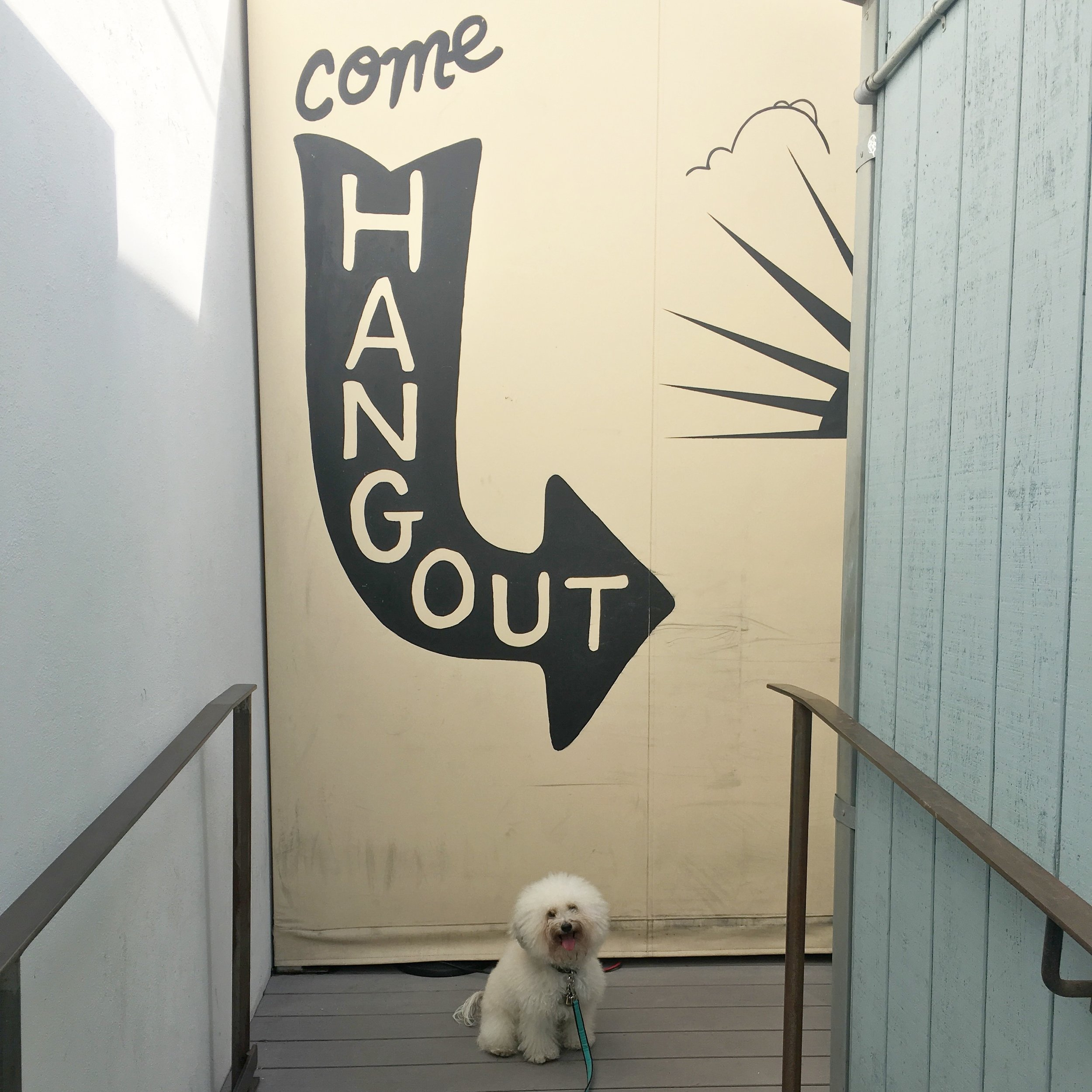 Cute fluffy dog by a mural at Toms dog-friendly coffee shop in Venice Beach, CA | Watson & Walls