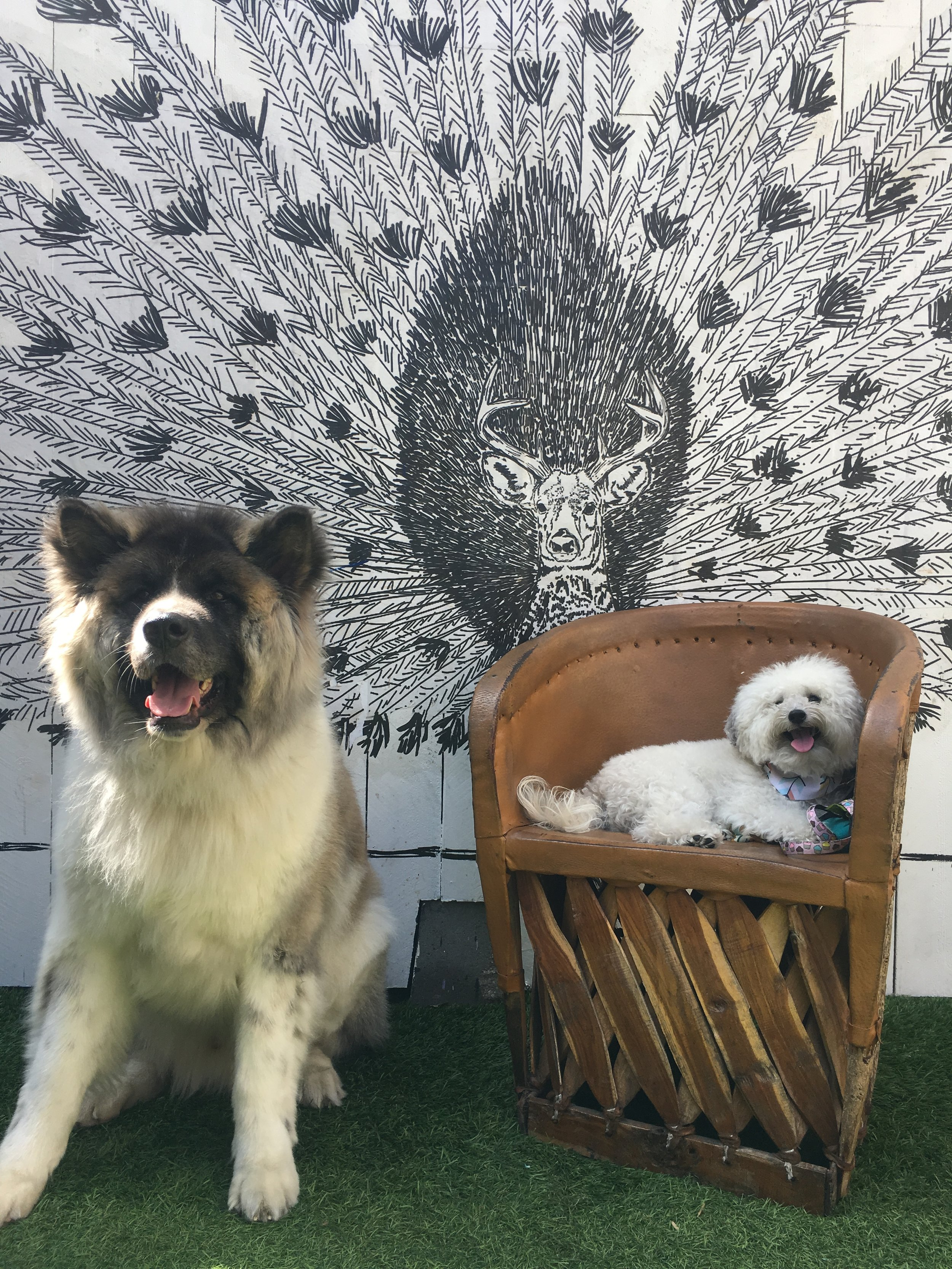 Cute fluffy dogs by a mural at Toms dog-friendly coffee shop in Venice Beach, CA | Watson & Walls
