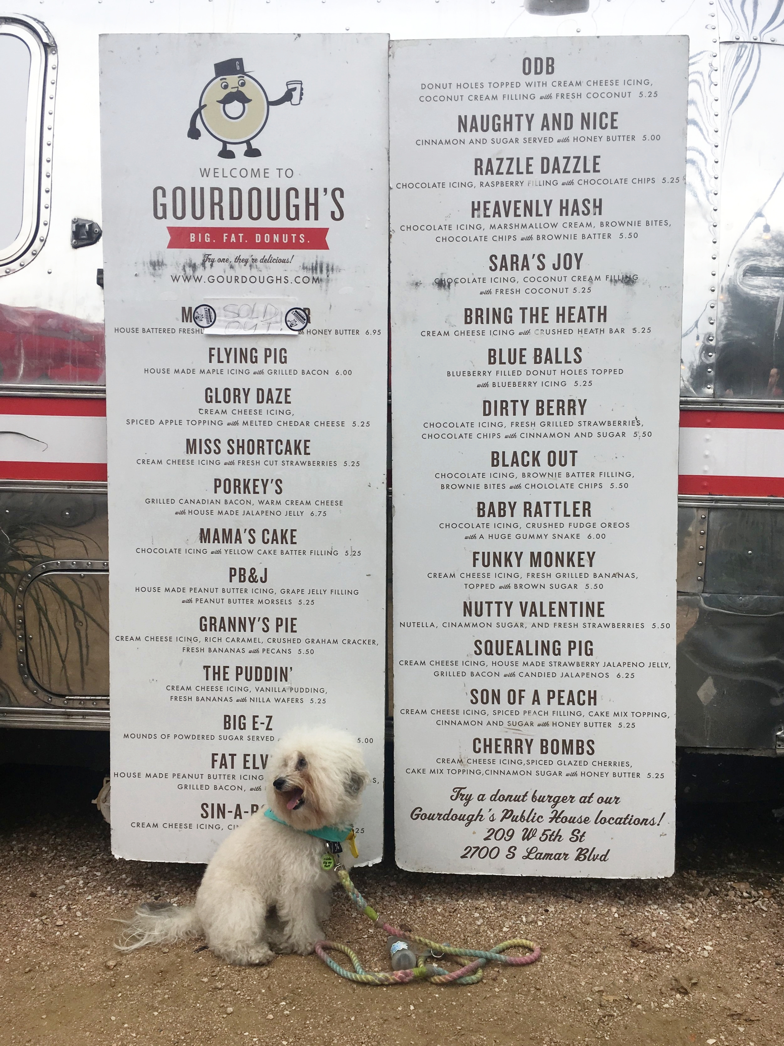 Watson with all the donut options at dog friendly Gordough's in Austin, TX | Watson & Walls
