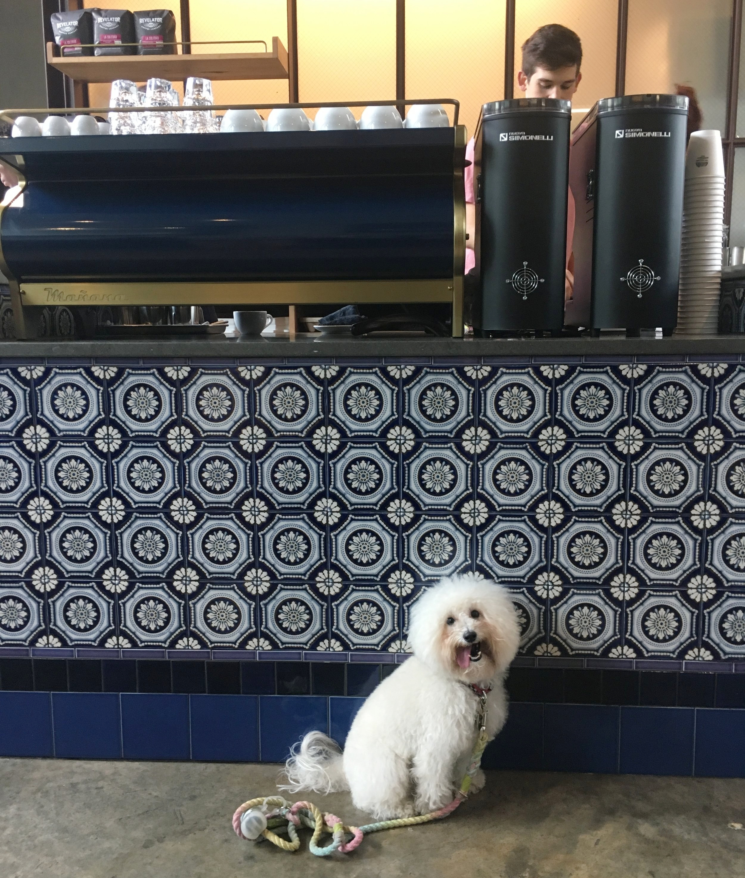 Watson by the beautiful blue tile of Manana Coffee in South Congress Austin, TX | Watson & Walls