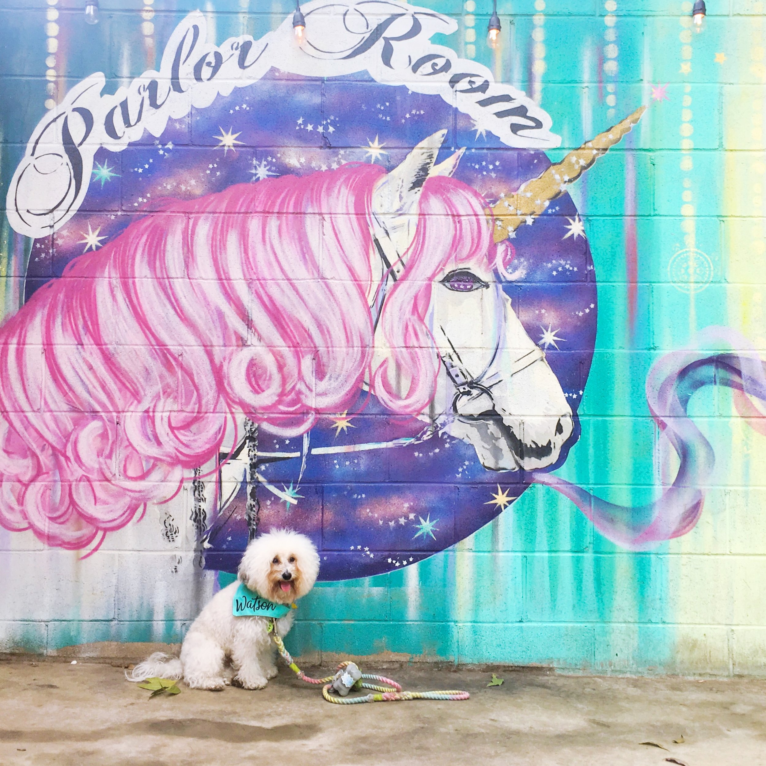 Watson by the Unicorn Mural at the dog-friendly bar Parlor Room on Rainey St. Austin, TX | Watson & Walls