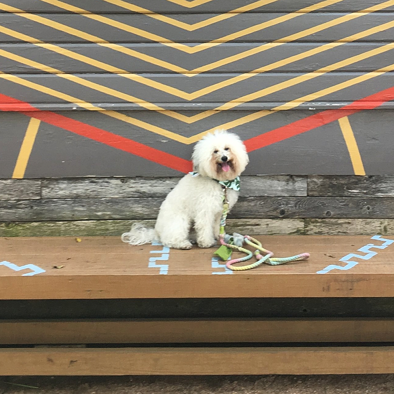 Watson by the Give Mural at dog friendly store Toms in Austin, TX   Watson & Walls