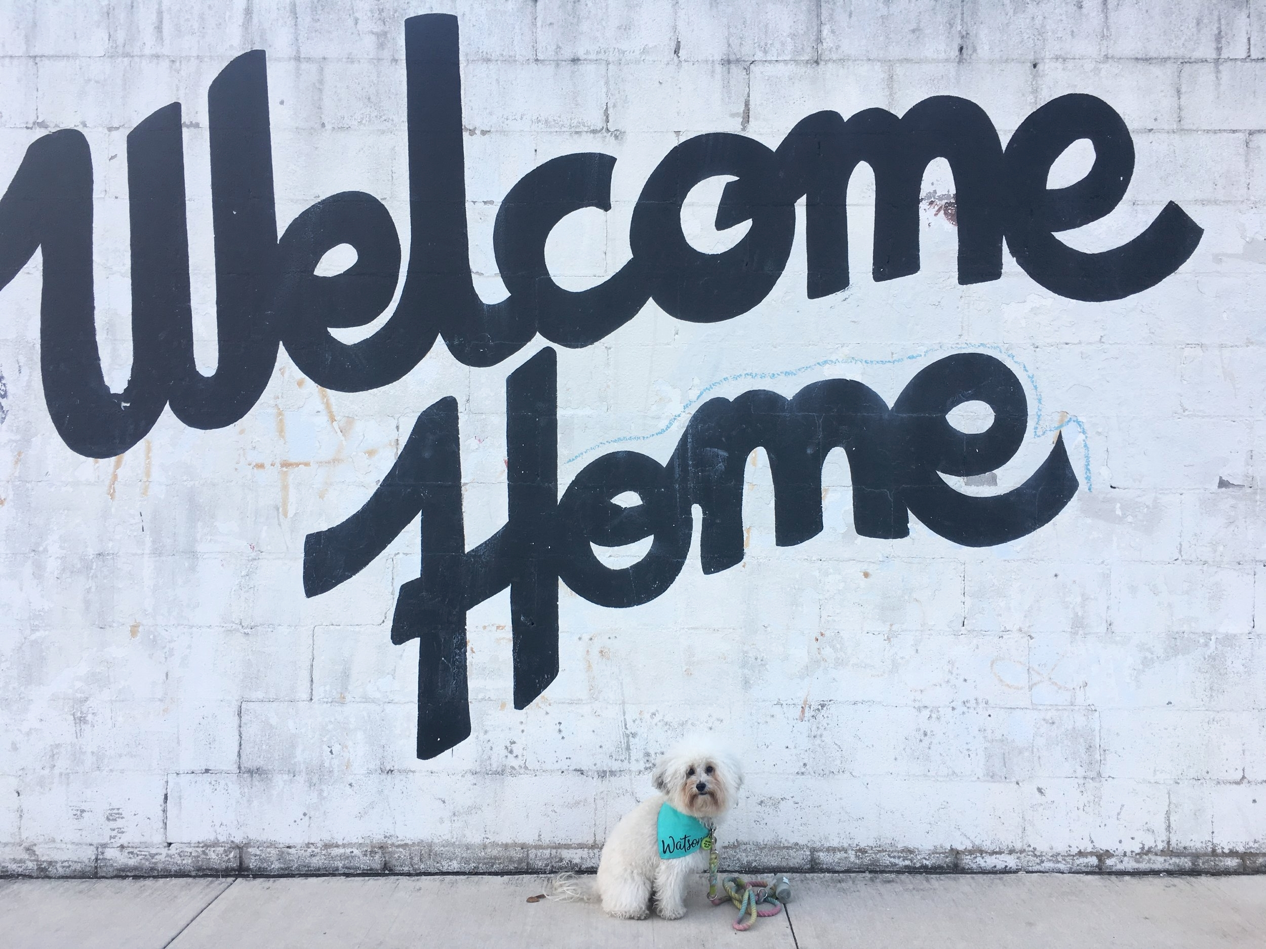 Watson by the Welcome Home Mural at Lustre Pearl in Austin, TX | Watson & Walls