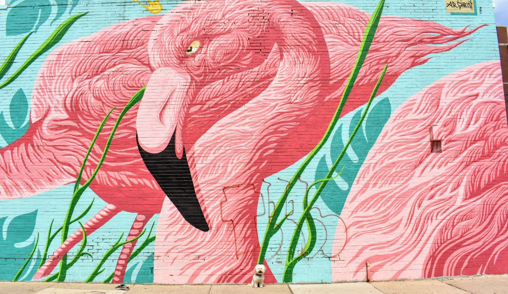 Pink and teal flamingo wall in dog-friendly Chicago | Watson & Walls