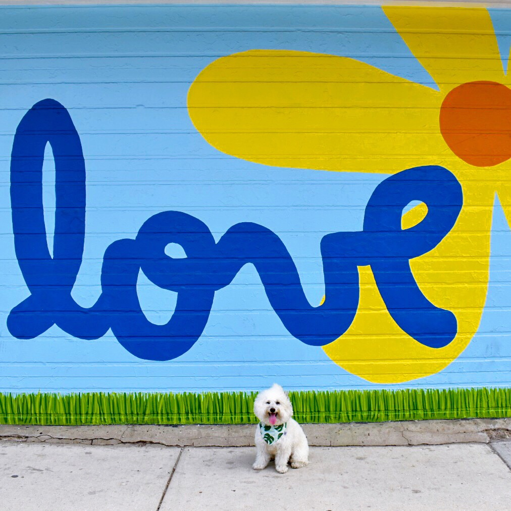 Love mural with sunflower in dog friendly Chicago, IL | Watson & Walls