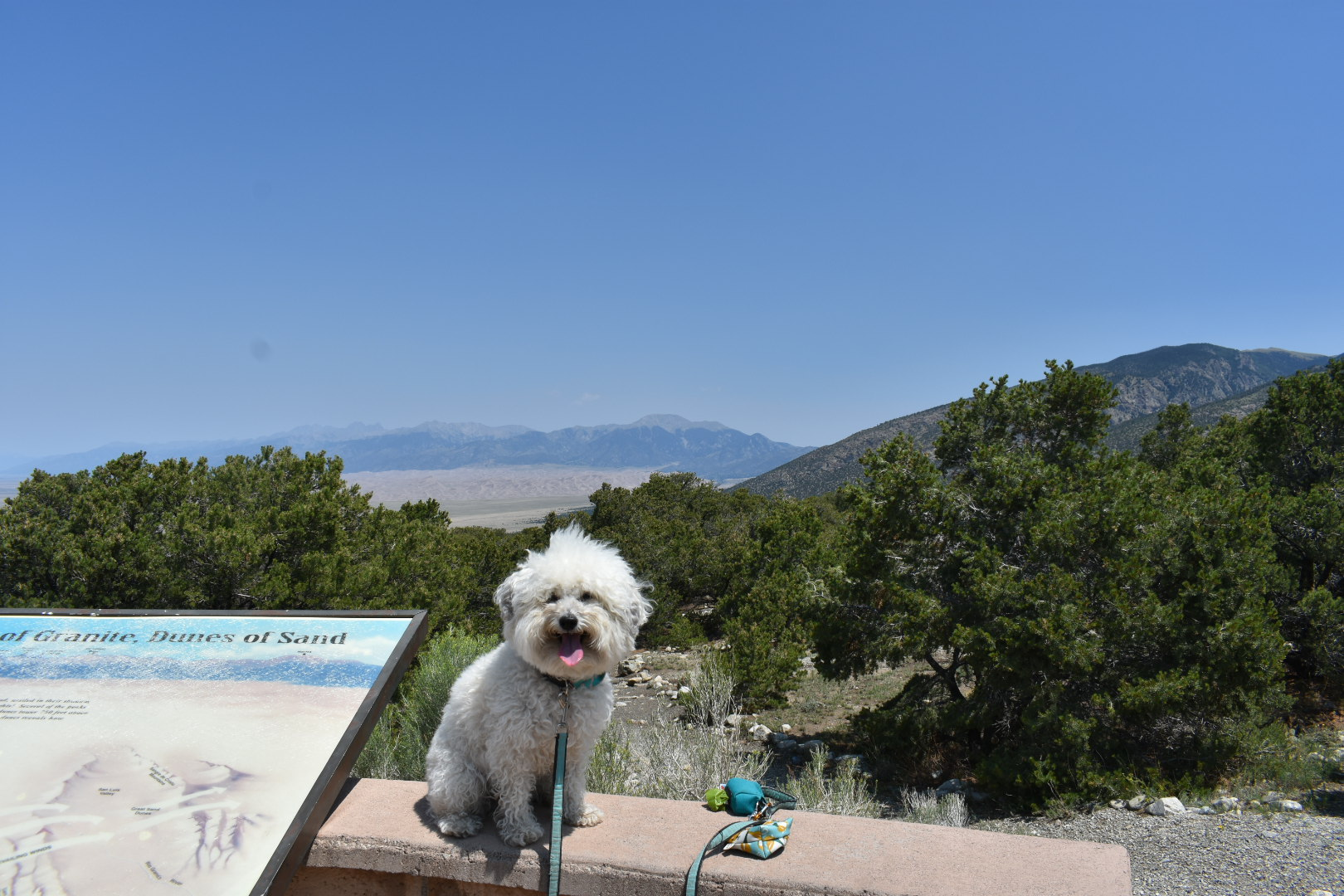Watson at Great Sand Dunes National Park, Colorado | Watson & Walls