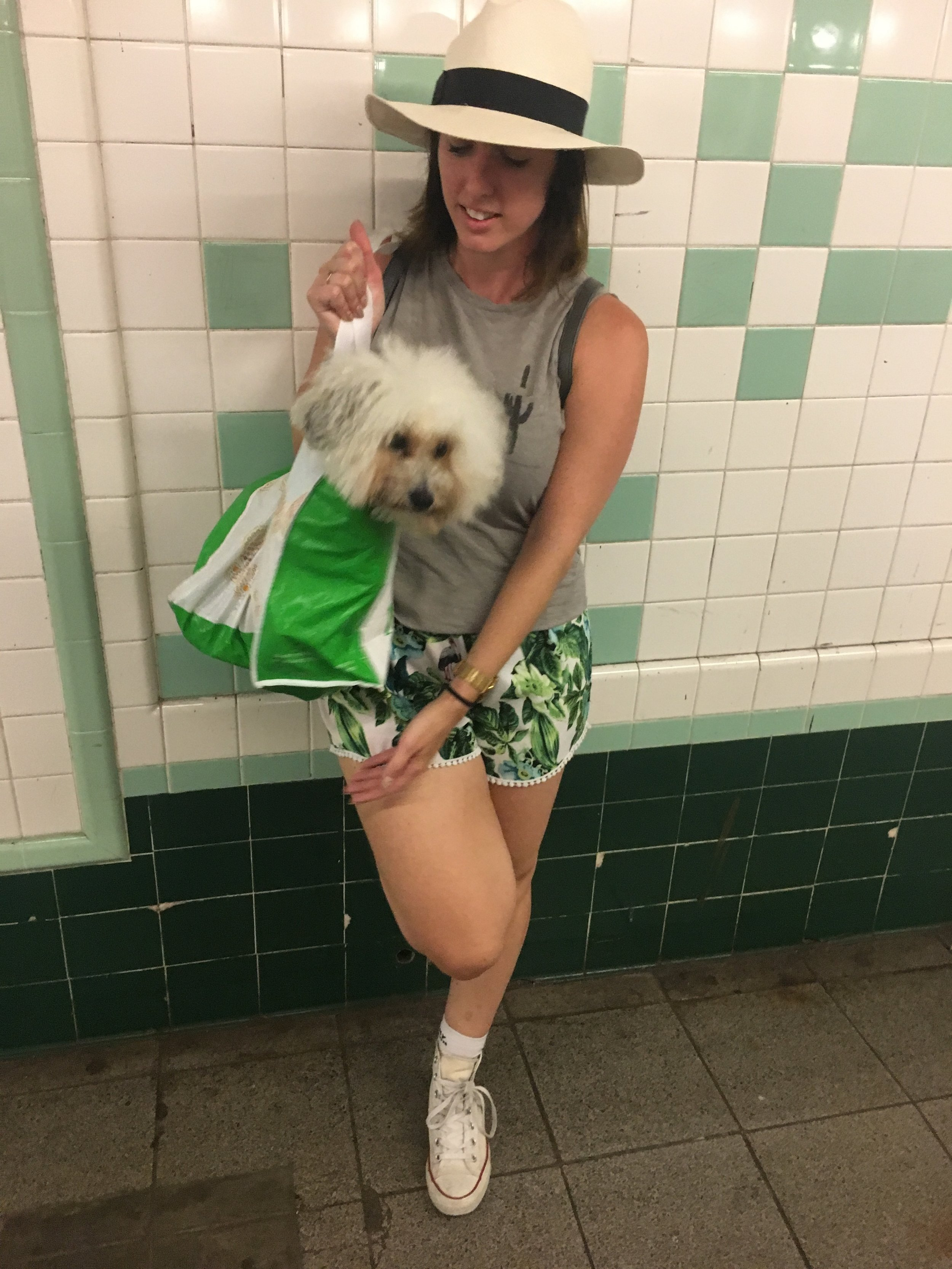 Fluffy dog in a bag on the subway in New York, NY | Watson & Walls