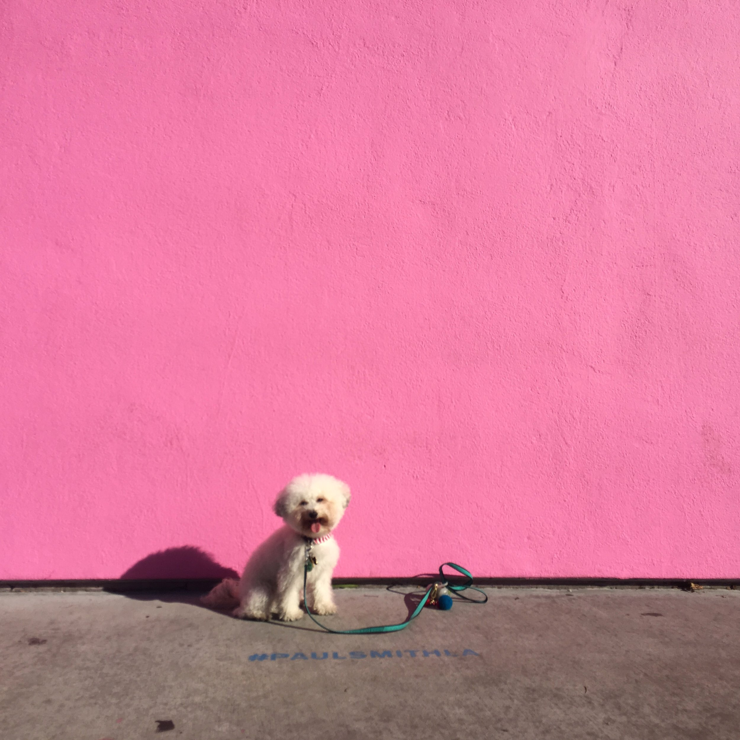 Best murals in West Hollywood, CA - Paul Smith Pink Wall | Watson & Walls