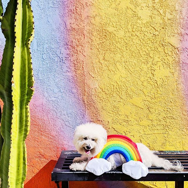 What's better than a fluffy double rainbow 🌈? Well, nothing.. but second best is a round up of all of my favorite mural crawls in LA! Check out my post in partnership with @dailybarker at the #linkinbio 🙌 #wallcrawl #ilovela . . . . #rainbowlove #rainbow🌈 #fridayiminlove #muralcrawl #walltraveled #wallswallswalls #ihaveathingwithwalls #friyayvibes #weeklyfluff #weekendmode #fluffonfleek #fluffbutt #dressedtomatch #losangelesart #cityguide #venicebeach #westhollywood #melroseave #longbeach #artsdistrictdtla #murals #bestofla #doublerainbow