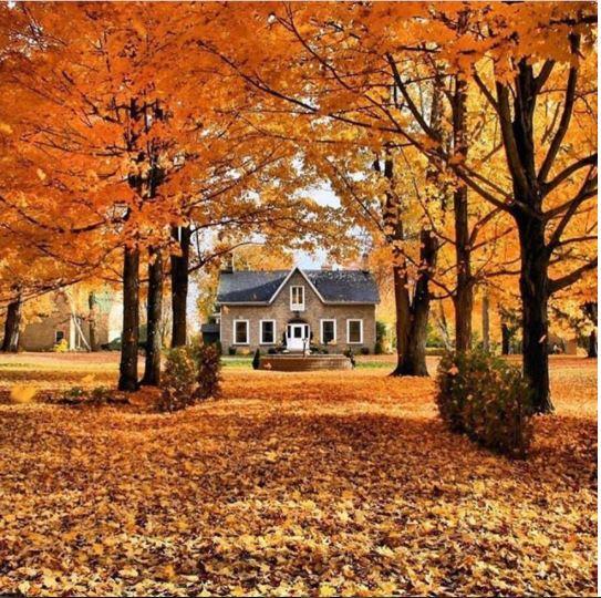 3 things for fall.JPG
