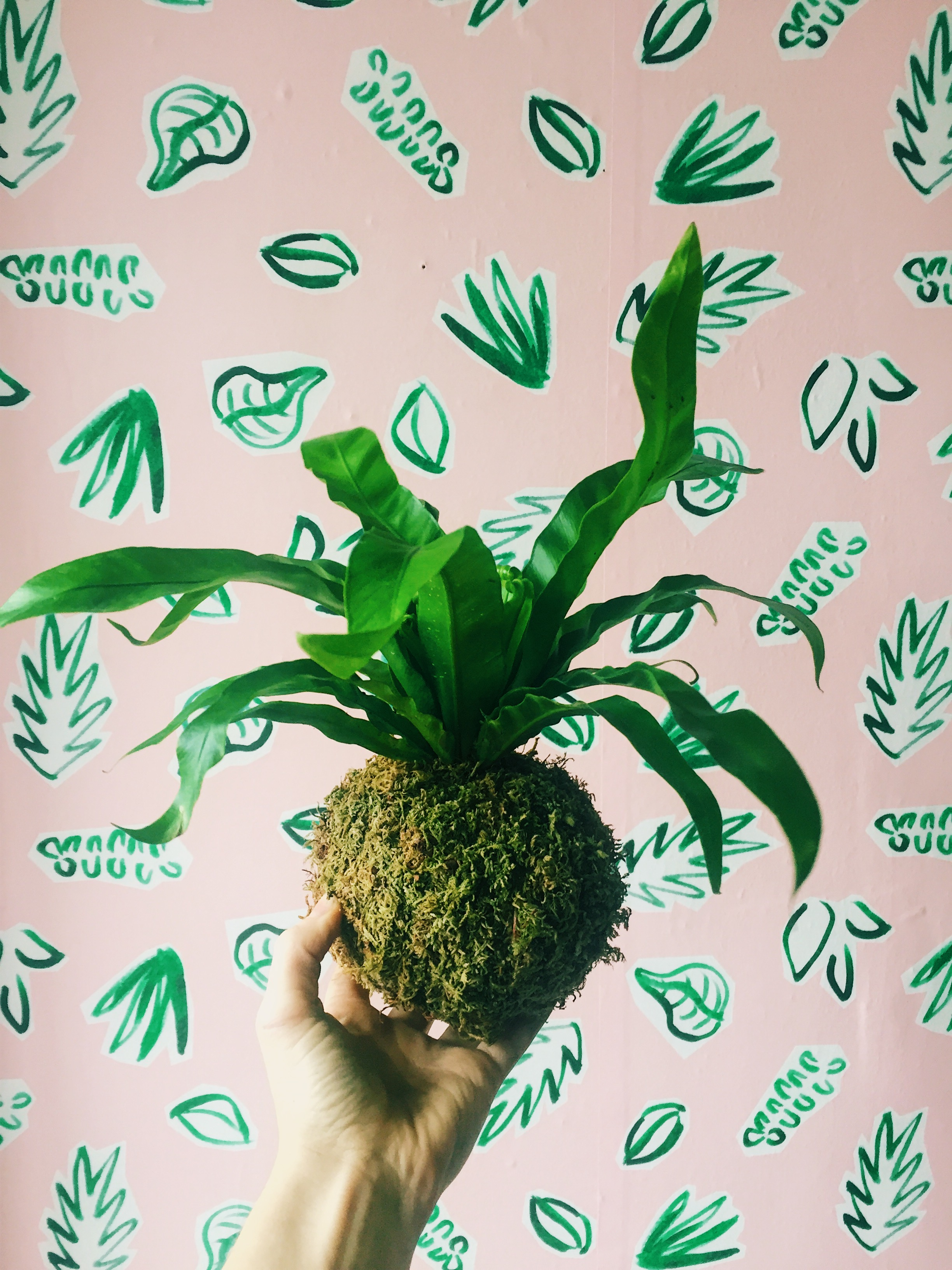 Plants on Pink Wallpaper by Kathryn Zaremba