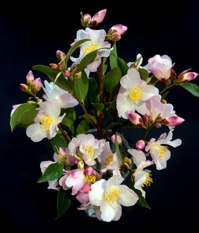 Vase of Fairy Blush