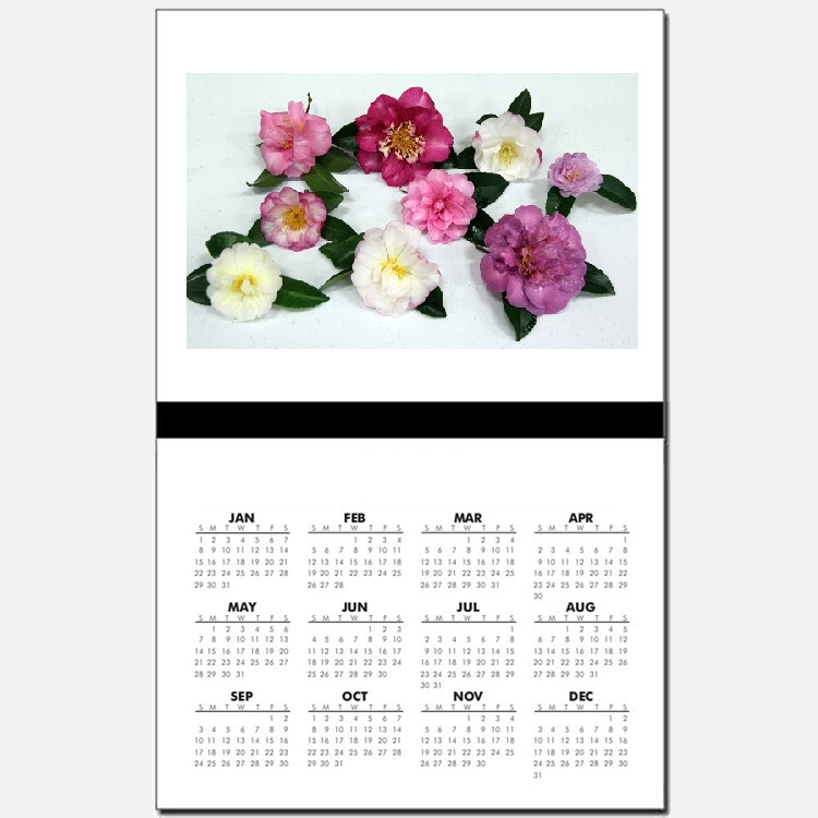 Camellia Calender square.jpg