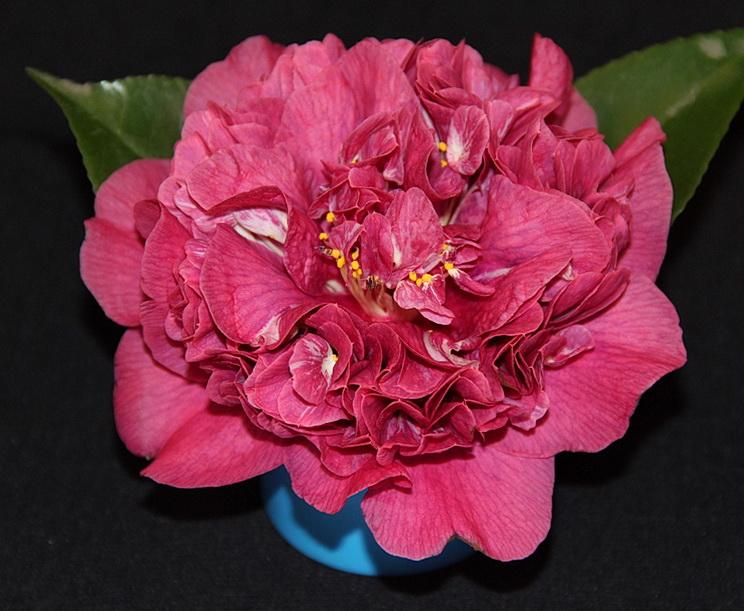 J. Violet Bouquet