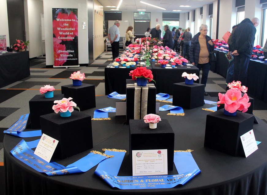 Camellia Show at Waverley held on 17 & 18 August 2019