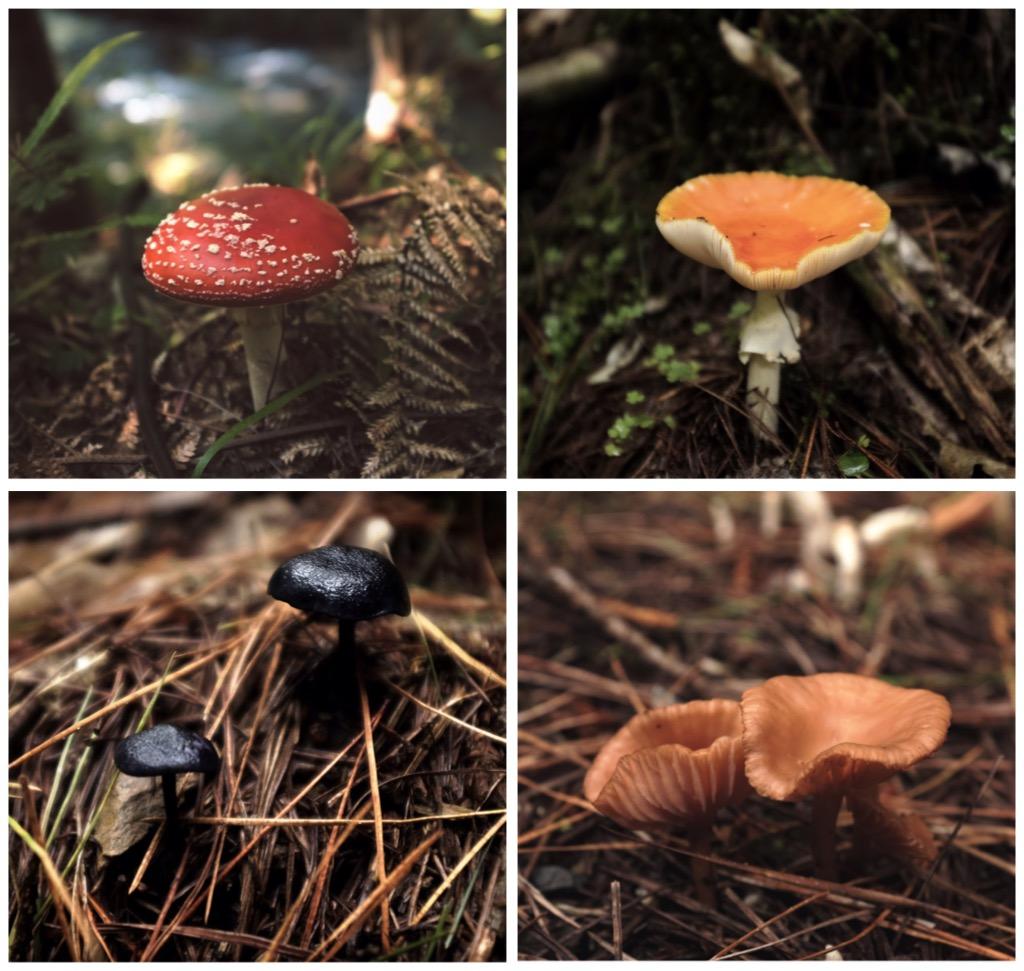 Many mushrooms!