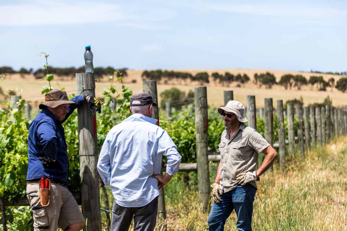 Provenance Wines Vineyards - Darriwill, Ceres, Scotsburn & Sinclair