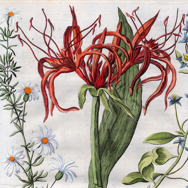Antique Botanical Prints