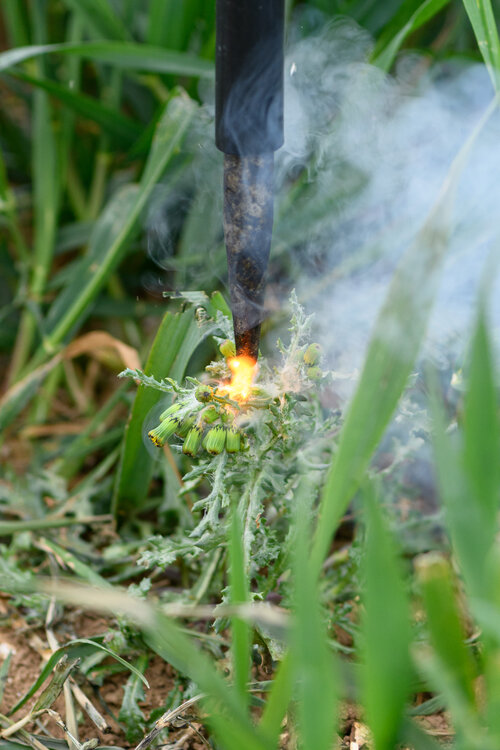 Zapping individual weeds with electrical 'lightning strikes', using no chemicals.
