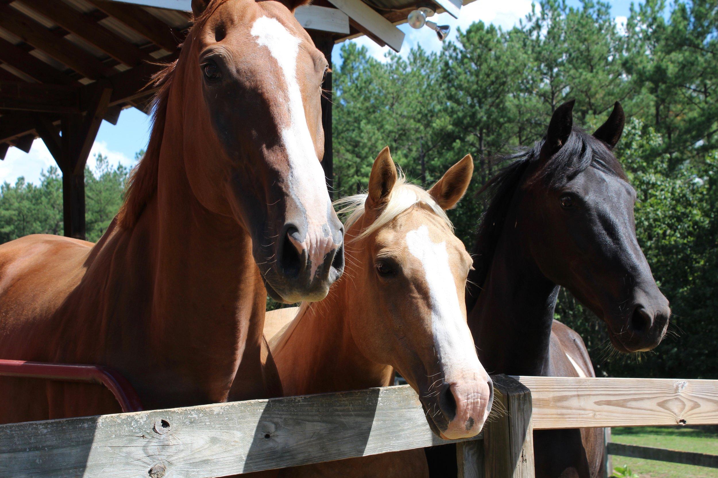 Equines.jpg