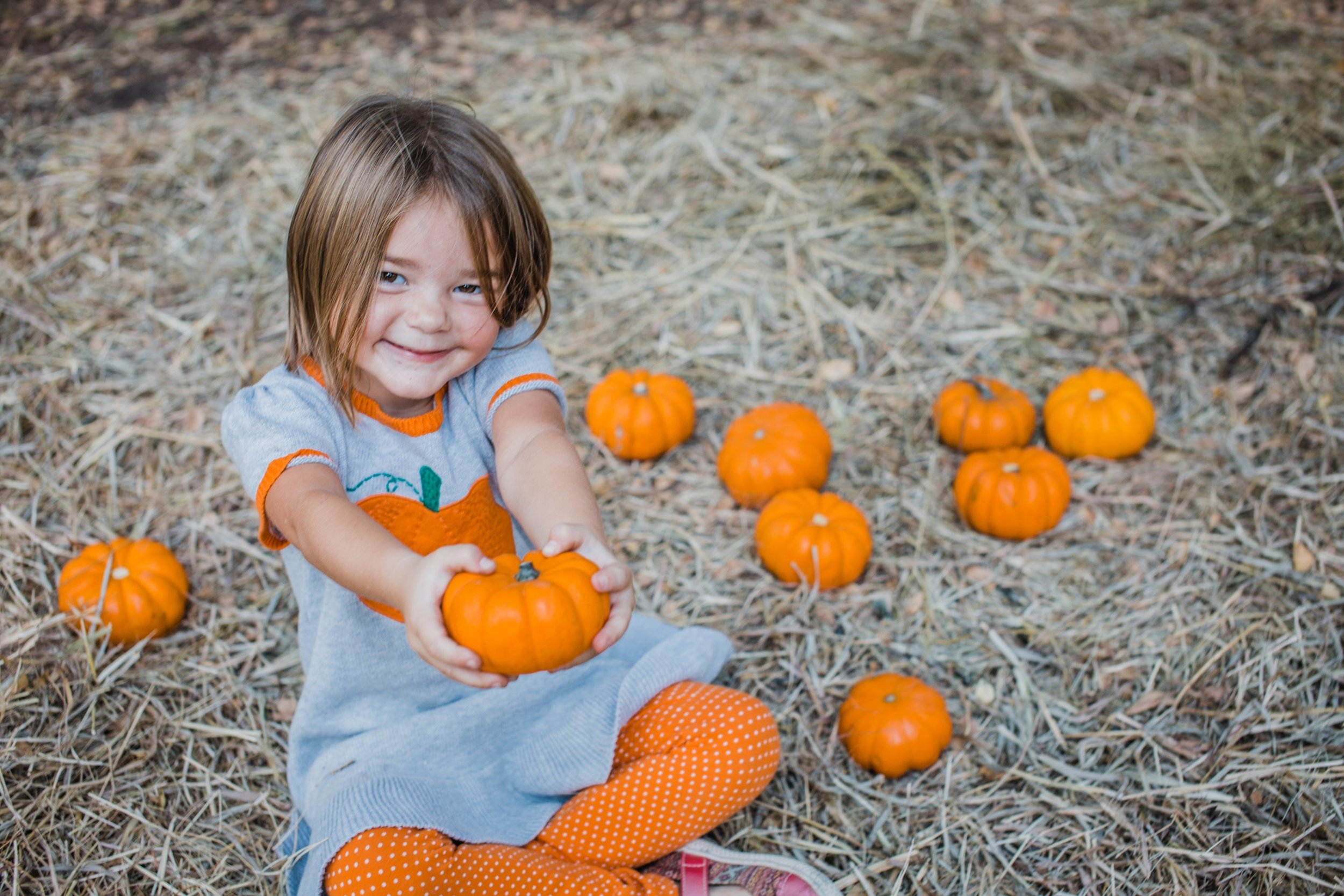 scpf-pumpkins-sweetie.jpg