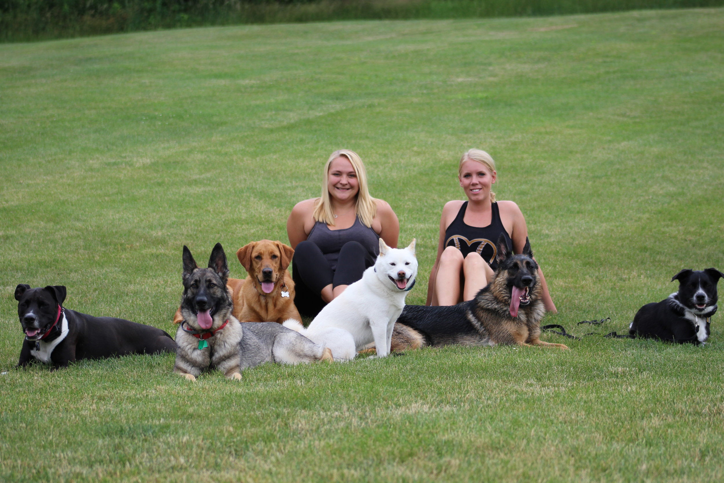 Pittsburgh Dog Trainers