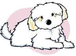 Maltipoo+Puppies+For+Sale